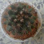 Collecion de CactusLand