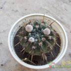 Collecion de Don_Cactus