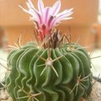Collecion de ana-cactusin