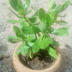 Collecion de cactusluis