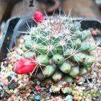 Collecion de cactusredondo