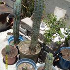 Collecion de rastakat