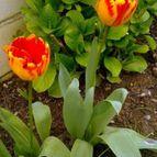 jardindepaloma