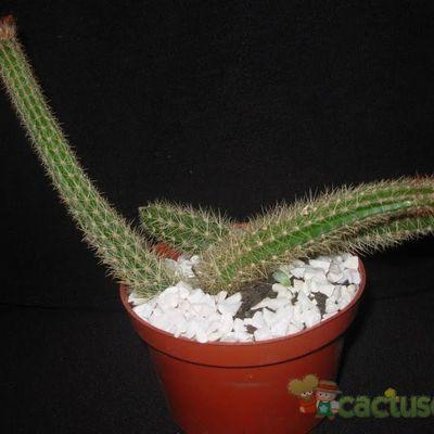 Fotografía tomada por Cactus-Uirapuru