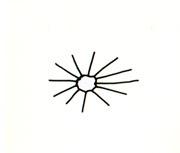 Forma de las espinas del cactus
