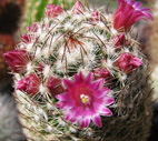 Shape of flowers on the cactus